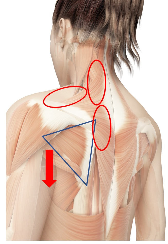 左肩甲骨 違和感