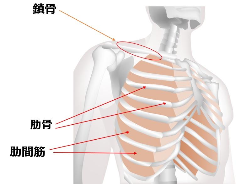痛み あばら骨 肋骨骨折やヒビが入りやすいあばら骨。骨折のタイプや症状などを経験者が解説します。